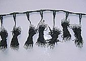 Rideau à LED KARNAR INTERNATIONAL GROUP LTD